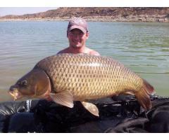 Rybolov- Ebro- sumci, kapři,candáti